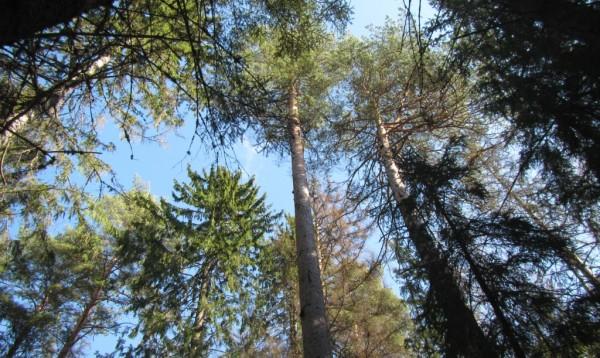 Как получить лес от государства бесплатно?